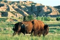 Wild Frontier - North Dakota