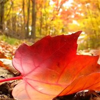 Michigan Fall Favorites