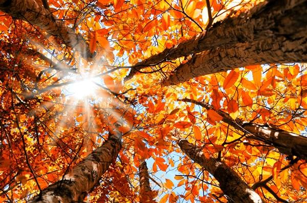 Autumn Mystery Tour