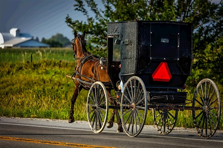 Amish In Shipshewana