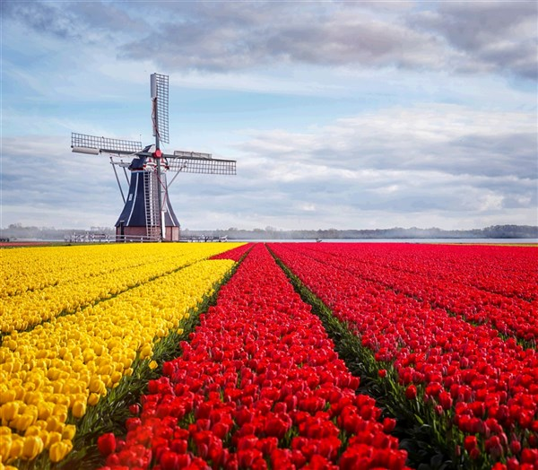 Spring Blooms in Holland